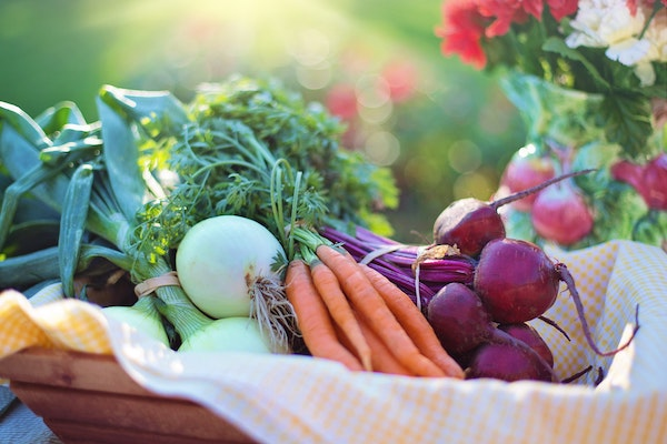 RightFood4U Nutritional Therapy - Nutrition Programmes - Bray Wicklow Dublin